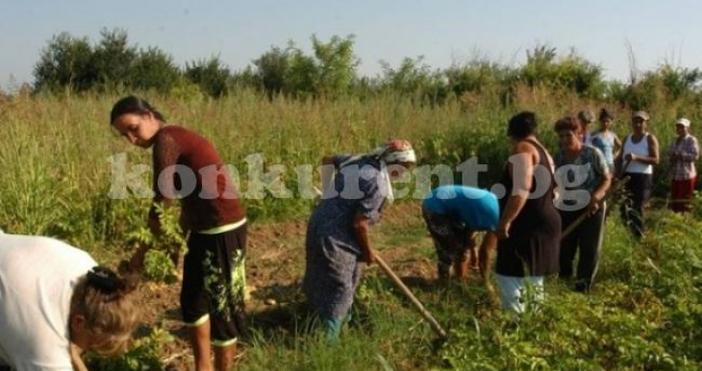 Около 60 души, основно роми, регистрирани на трудовата борса, отгледаха