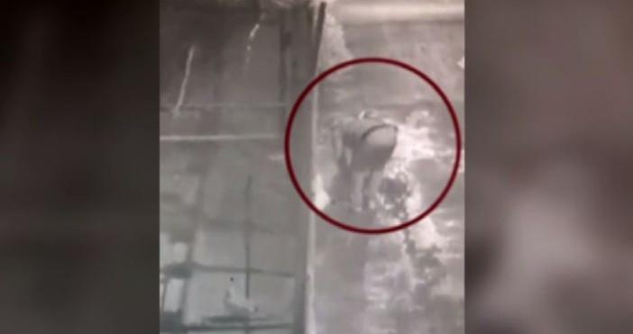 Снимка и видео: bTVПолицията в Перник задържа мъж, откраднал 10