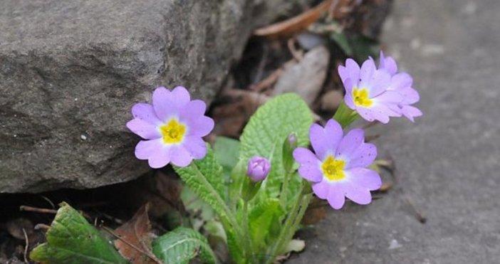 На 20 март точно в 16:15 настъпва астрономическата пролет!Това е
