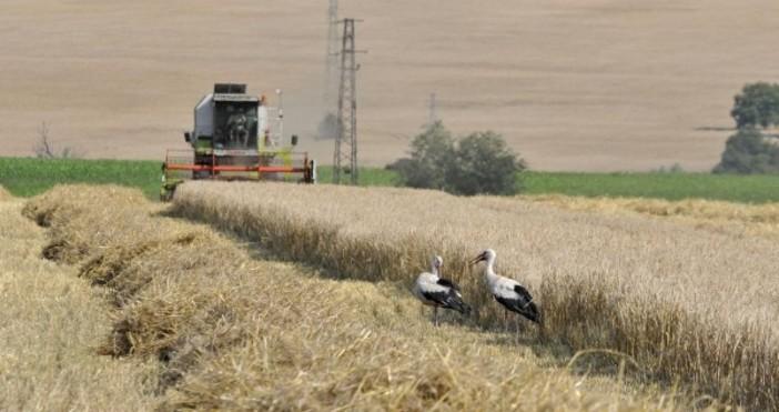снимка: БулфотоНай-евтината обработваема земя от целия ЕС е в България.