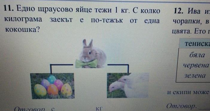 .dunavmost.comЕдно щраусово яйце тежи 1 кг. С колко килограма заекът