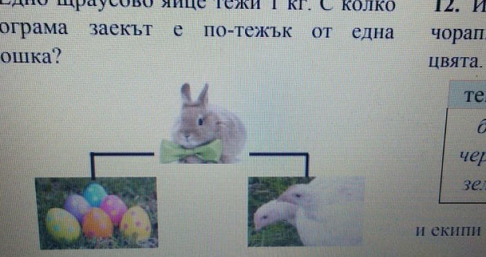 Едно щраусово айце тежи 1 кг. С колко килограма заекът