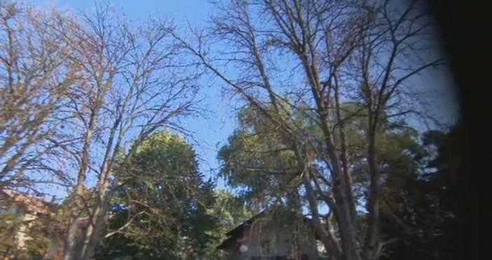 """Снимка: bTVЖители на столичния квартал """"Лозенец"""" сигнализираха институциите, че дървета"""