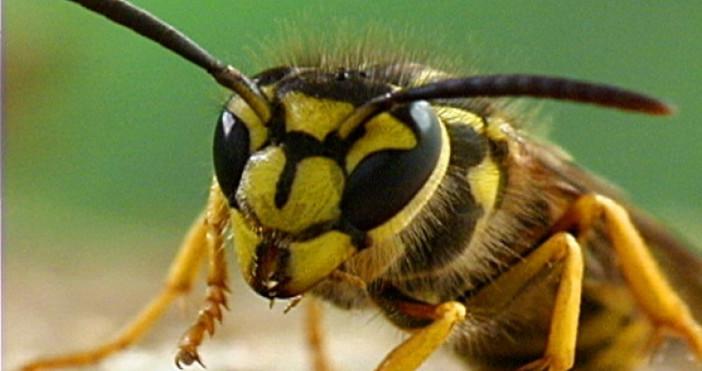 Много малко хора успяват да избегнат ухапване от насекоми. Този