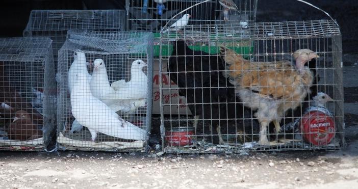 Гълъби, зайци, патици, канарчета, а също яйца, зърно в торби,