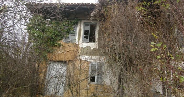 Череша цъфна посред лято в кюстендилското село Слокощица. Овощното дръвче