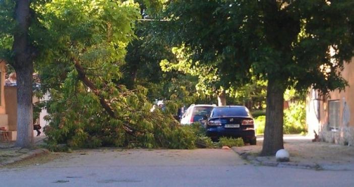 Счупен клонна дърво падна върху лек автомобил на ул.