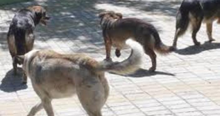 Снимка БулфотоБезстопанствените кучета на територията на Столична община са приблизително