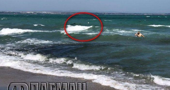 Снимка: ФлагманУдавник, който вероятно е получил инфаркт в морето или