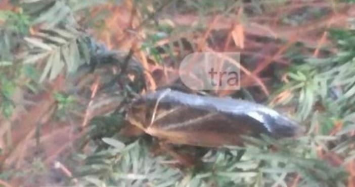 СнимкаTrafficnews.bgЖители на Пловдив пропищяха от появата на едро насекомо. Буболечката