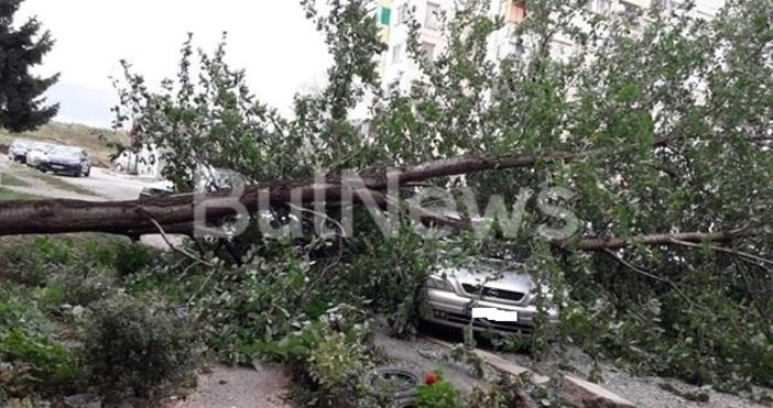 Снимки: BulNews.bgОчакваният силен вятър за днес се развихри първо в