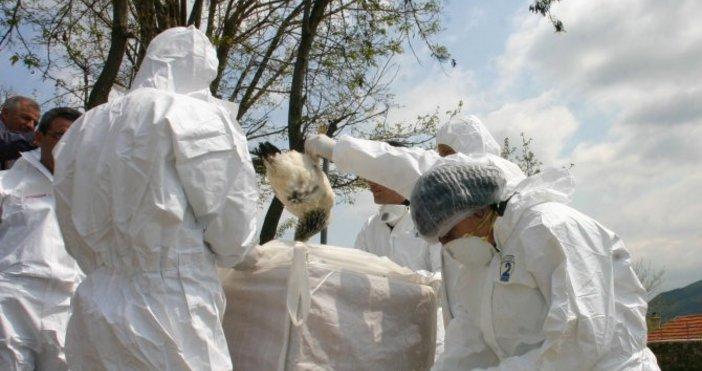 Българската агенция по безопасност на храните констатира първично огнище на