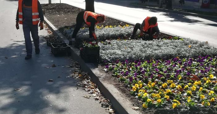 По градинките на варненските булеварди кипи усилена работа.Работници започнаха да