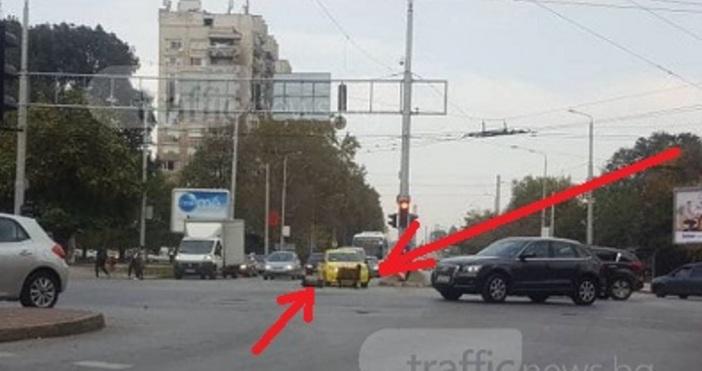 Снимкиtrafficnews.bgДве овчици взеха кръстовище в Пловдив за дневна стая. Едната