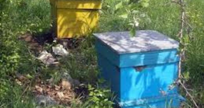 Регионалните пчеларски организации в Североизточна България проведоха голям протест пред