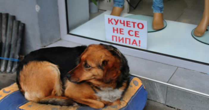Снимка: Бездомно куче, което не се пипа, се превърна в атракция във Велинград