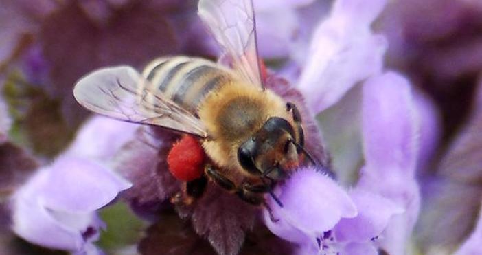 Снимка БулфотоОт години има сигнали за намаляващата популация на насекомите