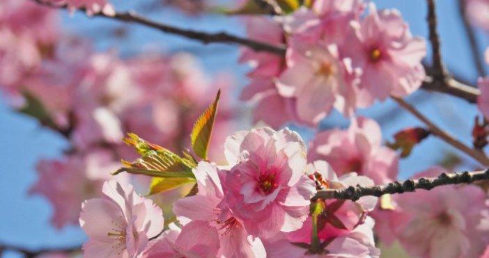 Снимка Булфото, архивАстрономическата пролет настъпва днес у нас в 23