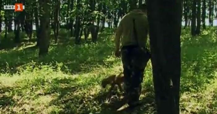 БНТЛовци на трюфели от Русе настояват дейността им да се
