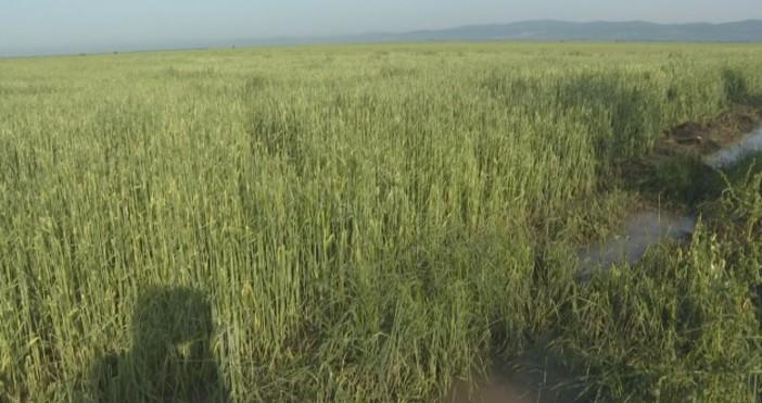 БтвГрадушката унищожи над 25 000 декара посеви в регионаЗапочна описването