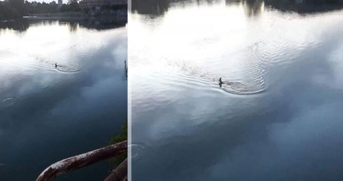 dunavmost.comЖивотното попаднало в лимана на Пристанище ЗападрекламаСпасиха сръндаче, което близо