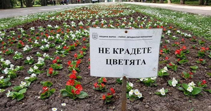 снимка: БулфотоДълга цветна градина ще краси централната алея в Морската