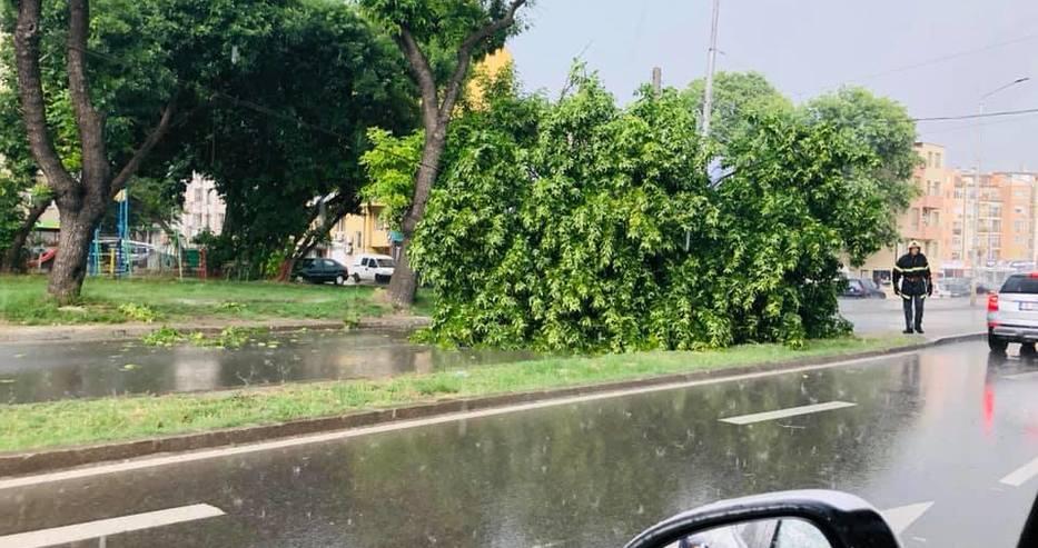 От последните минути! Заваля дъжд във Варна и дърво падна върху кола на бул.