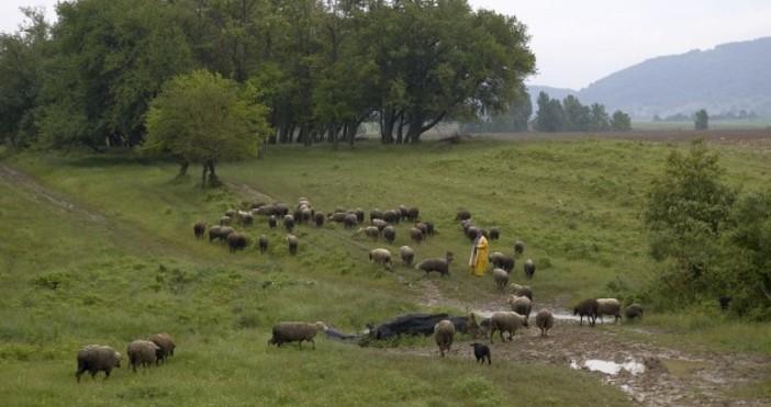 Снимка: Булфото, архивБраншовите организации от животновъдството най-после имат актуална информация