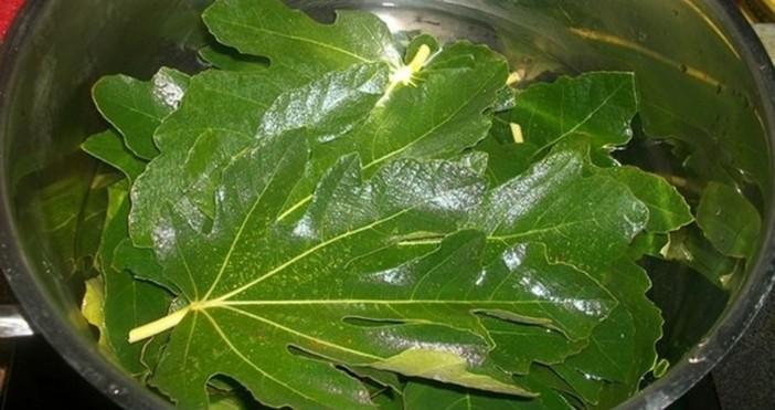 lechitel.netЛиста от смокиня – по-полезни от самия плодЛиста от смокиня