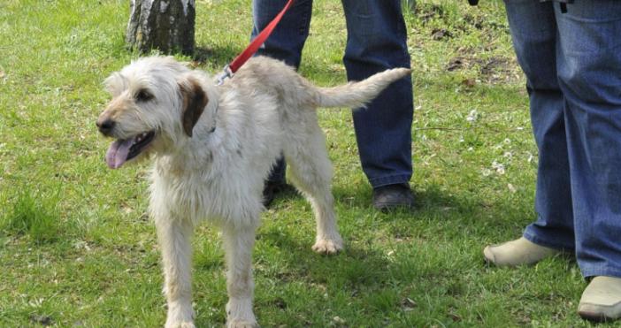Снимка БулфотоМасови проверки как стопаните разхождат кучетата си. Поиска ги