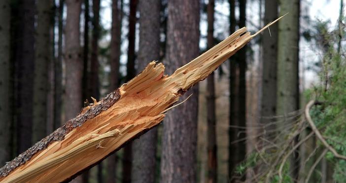 *снимката е илюстративнаОсем сигнала за паднали дървета и клони са