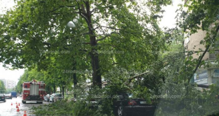 Снимка24rodopi.comРазразилата се гръмотевична буря след 14.00 часа днес повали огромни