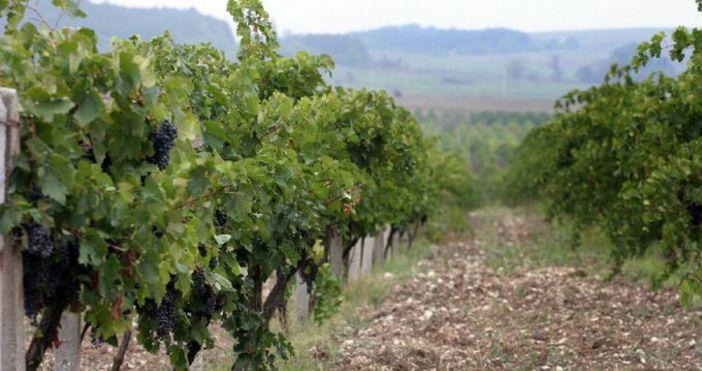 Снимка Булфото, архивОбщините да предоставят свои земеделски земи на социално