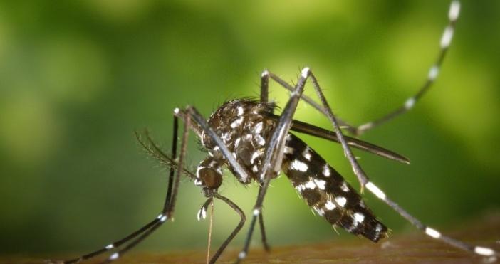 Снимка: Ето коя е любимата кръвна група на комарите