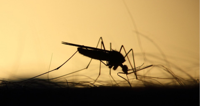 Учени от град Томск установиха, че комарите са привличани различно