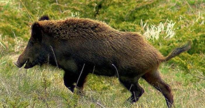 Продължават и обходите в горите, като се следи за животни
