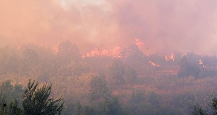 снимка: БулфотоДосъдебно производство е образувано във връзка с възникналия пожар