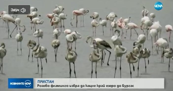 Стотици красиви птици избраха да отдъхнат в Атанасовското езеро. През