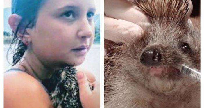 Храбрата десетгодишна Адриана Жесперс спаси от сигурна смърт бедстващ таралеж,