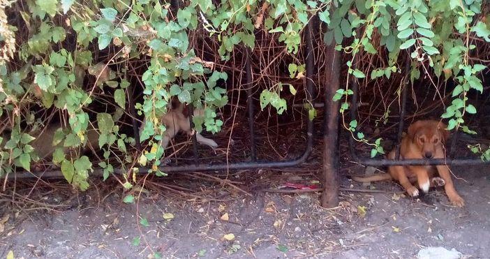 """снимка: читателЧитател на """"Петел"""" ни изпрати снимка от Станчовата алея"""