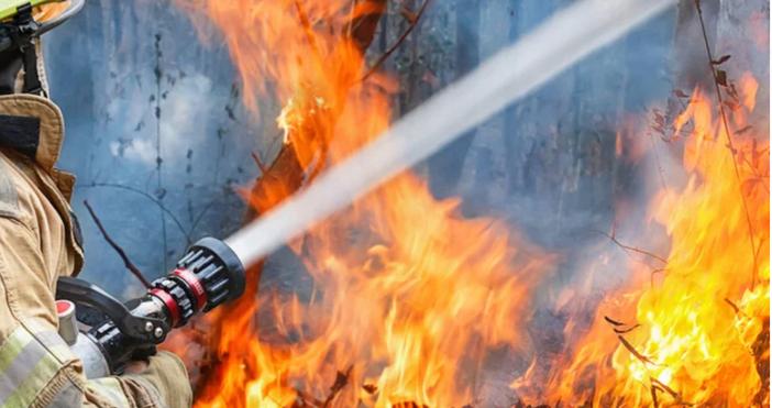 Голям пожар е изпелелил близо 700 декара гори в Огражден