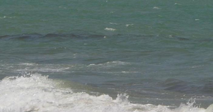 Снимка БулфотоТруп на диво прасе изхвърли морето на плажа между