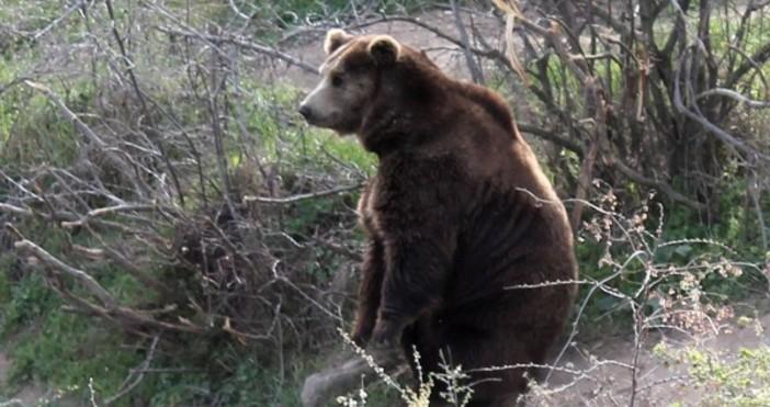 Убита е проблемна мечка в района на с. Кожари, община