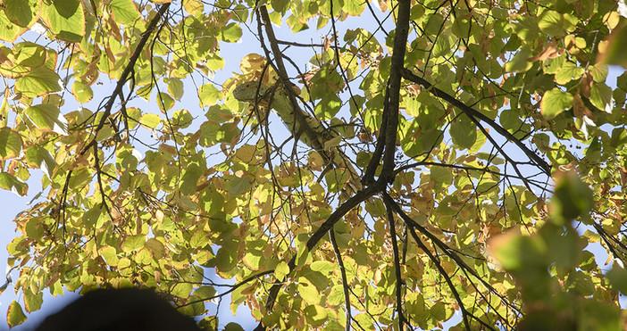 Снимки: Община Стара ЗагораДълга почти един метър игуана бе свалена