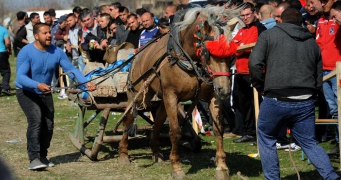 С конни надбягвания ще бъде отбелязан празника на гр. Белослав