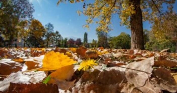 Снимка БулфотоТазгодишният месец октомври енай-топлият в света, откакто европейската служба