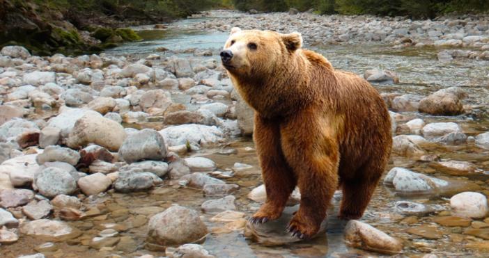 Снимка: pixabayМечка нахапа ловец в Стара Планина.Случката е станала по