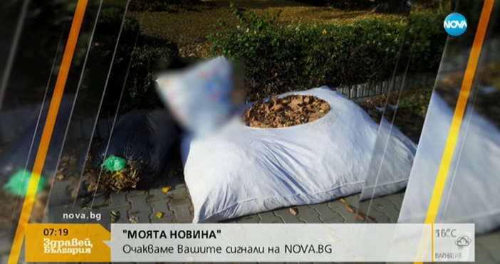 Снимка от Варна озадачи зрителите на Нова тв. Есенни листа