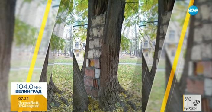 Строеж в дърво, показва снимка от групата