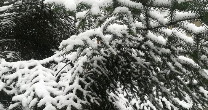 Сняг вали в Пампорово. Снежната покривка е около 1 -